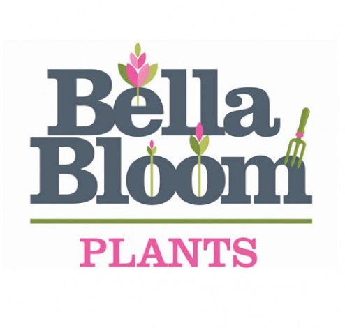 bellabloom logo square